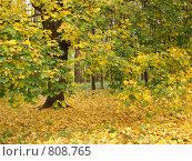 Осенние клены (2008 год). Стоковое фото, фотограф Сергей / Фотобанк Лори