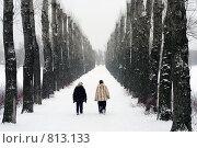Зимний парк. Стоковое фото, фотограф Павел Власов / Фотобанк Лори