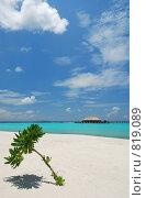 Купить «Морской берег (Мальдивы)», фото № 819089, снято 10 октября 2008 г. (c) Владимир Овчинников / Фотобанк Лори