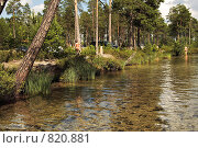 Купить «Берег светлого таежного озера, место летнего отдыха. Чистейшее озеро среди болот.», фото № 820881, снято 15 июля 2008 г. (c) Алексей Рогожа / Фотобанк Лори