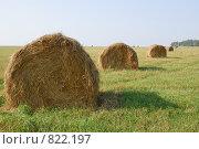 Купить «Поле, сено и небо», фото № 822197, снято 7 сентября 2008 г. (c) Дятлов Антон / Фотобанк Лори