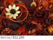 Фон с цветком и шишками. Стоковое фото, фотограф Анна Мегеря / Фотобанк Лори