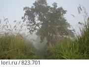 Купить «Раннее утро в джунглях, Непал, национальный парк Читван», фото № 823701, снято 1 ноября 2008 г. (c) Кудрина Надежда / Фотобанк Лори