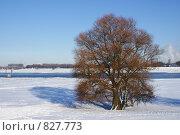 Зима. Стоковое фото, фотограф Igor Kaplan / Фотобанк Лори