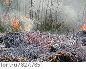 Горячий пепел. Стоковое фото, фотограф Екатерина Петрова / Фотобанк Лори