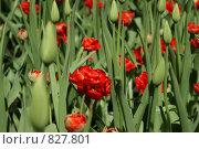 Цветы. Стоковое фото, фотограф Igor Kaplan / Фотобанк Лори