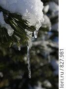 Первое тепло. Стоковое фото, фотограф Igor Kaplan / Фотобанк Лори