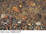 Море, янтарь. Стоковое фото, фотограф Елена Колтыгина / Фотобанк Лори