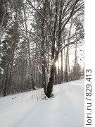 В зимнем лесу. Стоковое фото, фотограф Любовь Похабова / Фотобанк Лори
