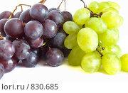 Белый и темный виноград. Стоковое фото, фотограф Марина Субочева / Фотобанк Лори