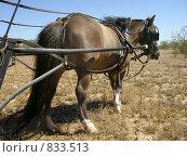 Купить «А пони - тоже кони!», фото № 833513, снято 6 апреля 2008 г. (c) Shawn A. Nelson / Фотобанк Лори