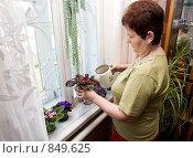 Купить «Полив комнатных цветов», фото № 849625, снято 25 апреля 2009 г. (c) Галина Лукьяненко / Фотобанк Лори