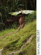 Племена папуасов провинции Ириан Джай (2007 год). Редакционное фото, фотограф Александр Киселев / Фотобанк Лори