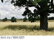 Засеянное поле. Стоковое фото, фотограф Александр Киселев / Фотобанк Лори