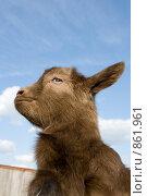 Купить «Молодой козленок», фото № 861961, снято 27 апреля 2009 г. (c) Вячеслав Борисевич / Фотобанк Лори