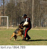 Купить «Работа с собаками», фото № 864789, снято 26 апреля 2009 г. (c) Фёдоров Евгений / Фотобанк Лори
