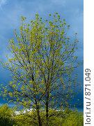 Небо и дерево. Стоковое фото, фотограф Муравьев Андрей / Фотобанк Лори