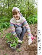 Купить «Дачница сажает рассаду помидоров», фото № 871077, снято 17 мая 2009 г. (c) Бондаренко Олеся / Фотобанк Лори