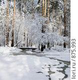Купить «Весенний пейзаж», фото № 875993, снято 2 мая 2009 г. (c) Юрий Бельмесов / Фотобанк Лори