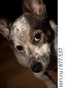 Купить «Собака», фото № 877537, снято 6 февраля 2009 г. (c) Ирина Литвин / Фотобанк Лори