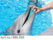 Купить «Дельфин», фото № 880569, снято 7 мая 2009 г. (c) Яна Королёва / Фотобанк Лори