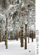 Зимний лес. Стоковое фото, фотограф Юрий Брыкайло / Фотобанк Лори