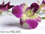 Купить «Орхидея», фото № 882605, снято 18 апреля 2009 г. (c) Литова Наталья / Фотобанк Лори
