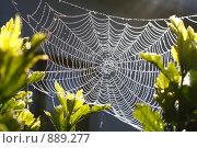 Хрустальная паутина. Стоковое фото, фотограф Марьяна Качак / Фотобанк Лори