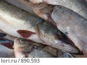 Рыба. Стоковое фото, фотограф Виктор Мухин / Фотобанк Лори