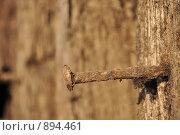 Гвоздь. Стоковая иллюстрация, иллюстратор Александр Меркушев / Фотобанк Лори