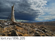 Купить «Туча над техногенной пустошью», фото № 896205, снято 30 мая 2009 г. (c) Валерий Александрович / Фотобанк Лори