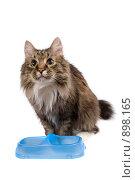 Купить «Пустая миска. Голодный кот выпрашивает кошачий корм», фото № 898165, снято 9 марта 2009 г. (c) Ирина Карлова / Фотобанк Лори
