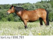 Купить «Лошадь стоит в поле среди одуванчиков», фото № 898781, снято 1 июня 2009 г. (c) Яна Королёва / Фотобанк Лори