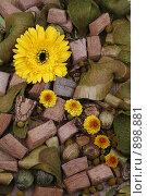 Цветочный натюрморт. Стоковое фото, фотограф Анна Мегеря / Фотобанк Лори
