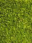 Фон из зеленых листьев, фото № 900717, снято 21 мая 2009 г. (c) Андрей Голубев / Фотобанк Лори