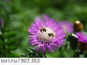 Опыление Цветка. Стоковое фото, фотограф Дмитрий Левченко / Фотобанк Лори