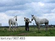 Купить «Лошади», фото № 907493, снято 6 июня 2009 г. (c) Яна Королёва / Фотобанк Лори