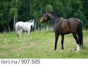 Купить «Лошади», фото № 907505, снято 6 июня 2009 г. (c) Яна Королёва / Фотобанк Лори