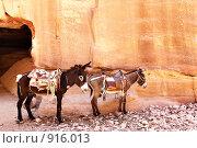 Купить «Два ослика в горах. Петра, Иордания», фото № 916013, снято 23 мая 2009 г. (c) Роман Сигаев / Фотобанк Лори