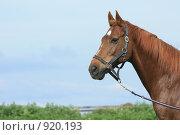 Купить «Конь крупным планом», фото № 920193, снято 14 июня 2009 г. (c) Яна Королёва / Фотобанк Лори