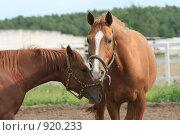 Купить «Две лошади в загоне», фото № 920233, снято 14 июня 2009 г. (c) Яна Королёва / Фотобанк Лори