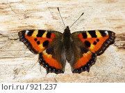 Купить «Бабочка крапивница Aglais urticae», фото № 921237, снято 14 июня 2009 г. (c) Саломатников Владимир / Фотобанк Лори