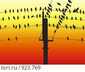 Птица на проводах. Стоковая иллюстрация, иллюстратор Екатерина Букреева / Фотобанк Лори