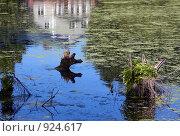 Купить «Отражение усадьбы в старом пруду», фото № 924617, снято 31 мая 2009 г. (c) Юрий Синицын / Фотобанк Лори