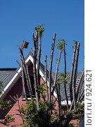 Купить «Скворечник на дереве», фото № 924621, снято 31 мая 2009 г. (c) Юрий Синицын / Фотобанк Лори
