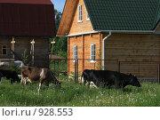 Купить «Домик в деревне и коровы», эксклюзивное фото № 928553, снято 10 июня 2009 г. (c) Яна Королёва / Фотобанк Лори