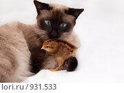 Купить «Кот и цыпленок», фото № 931533, снято 22 февраля 2019 г. (c) Светлана Чуйкова / Фотобанк Лори