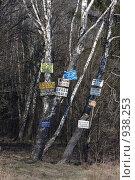 """Купить «""""Доска объявлений"""" в лесу», фото № 938253, снято 2 мая 2009 г. (c) Юрий Синицын / Фотобанк Лори"""