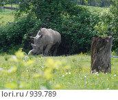 Купить «Носорог», фото № 939789, снято 30 мая 2009 г. (c) Олеся Ефименко / Фотобанк Лори