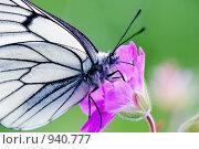 Купить «Бабочка - боярышница на цветке луговой герани», фото № 940777, снято 25 июня 2019 г. (c) Sergey Toronto / Фотобанк Лори